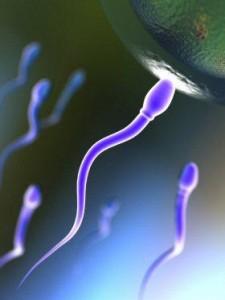 """sperm"" ""Besleyici-jel-banyosu"""